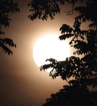 moon-super1