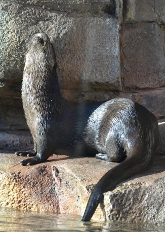 otter-howl-at-moon