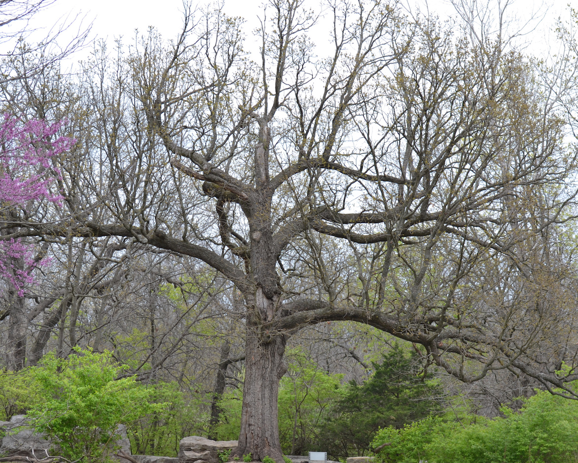 tree-ready-for-spring
