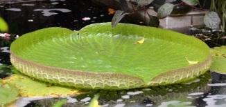 lily-pad-compare