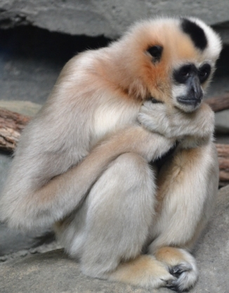monkey-wonder-forlorn