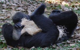 gorilla-blanket-outgrow